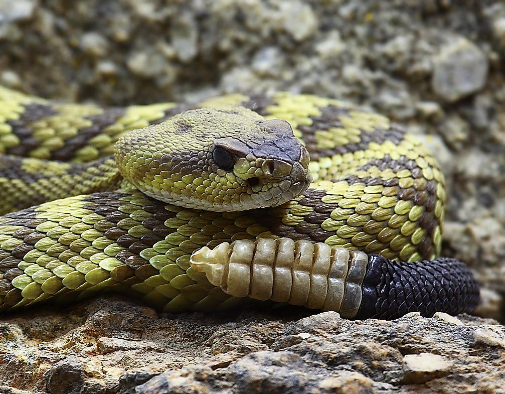 Опасный секс со зме й