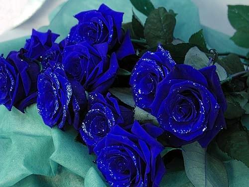 Синяя роза - эмблема достатка.  Символ таинственности, загадочности и...