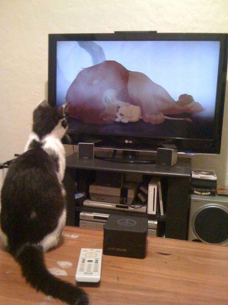 Забавные животные..)