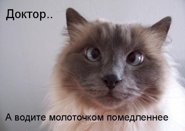 Cross Eyed Funny Looking Funny Memes About: Животные