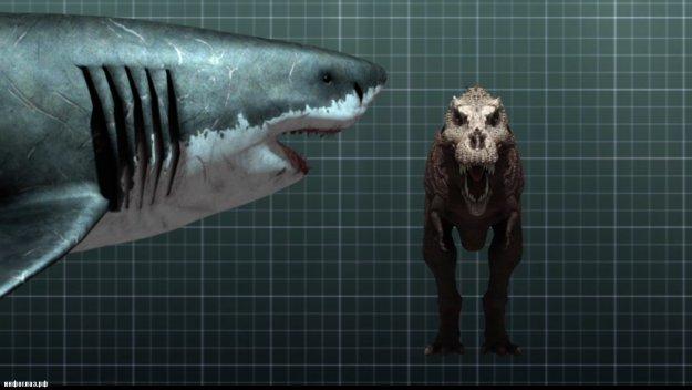 Соотношение размеров, мегалодон и тиранозавр (знаменитый T-rex) .