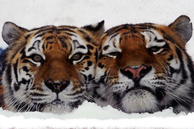 Забавные животные..))