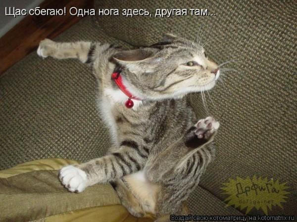 агрессивность кошки при знакомстве с котом