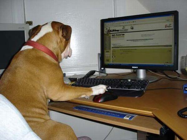 Животные за компьютером - Животные - Приколы - bigmir)net