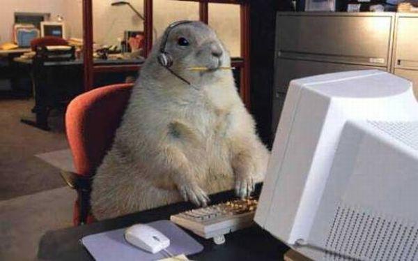 Животные за компьютером - Животные - Приколы - bigmir)