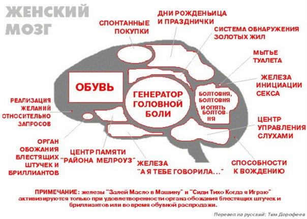 Во время секса женский мозг
