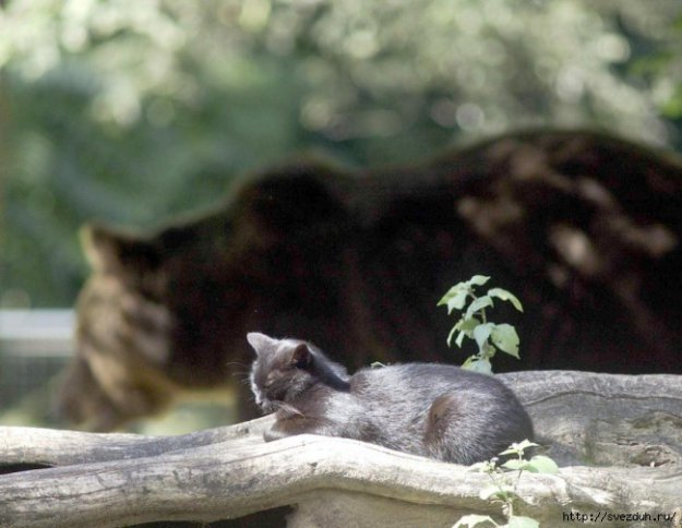 медведь кошка фото