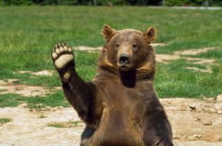 Картинки по запросу медвед