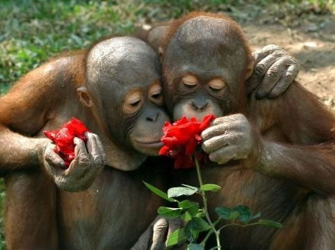 Даже они дарят цветы... - bigmir)net