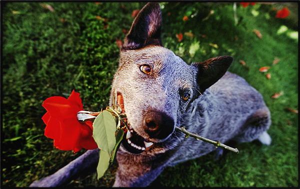 Знакомства собак онлайн